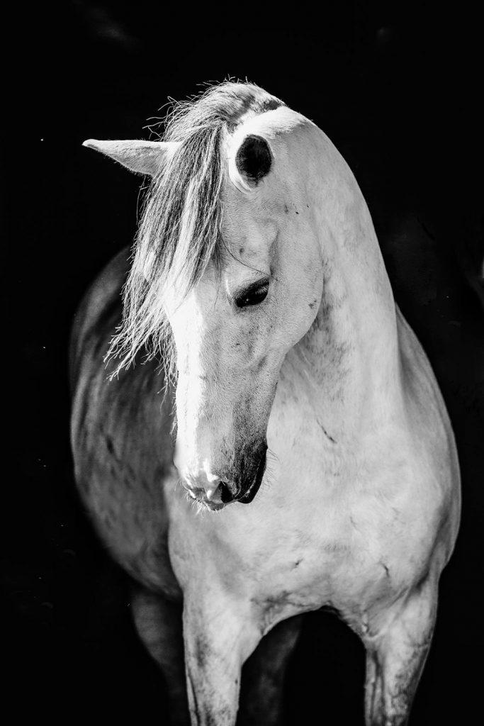 paard fotografie